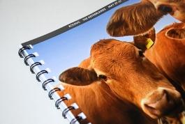 ICFAR Nederland folder